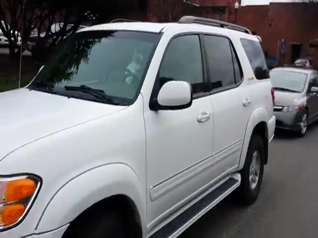 Impatient Dog Blasts Car Horn  (VIDEO)