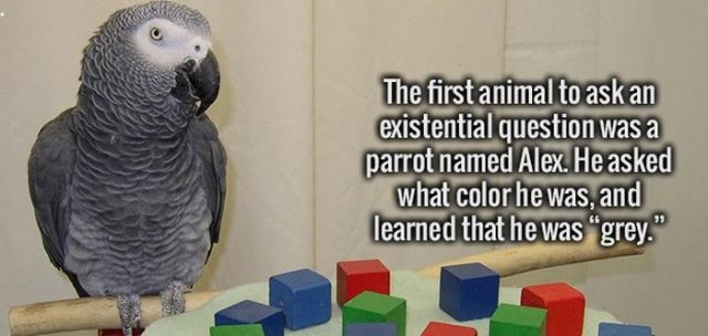 Useless Trivia That Will Sharpen Your Brain Today
