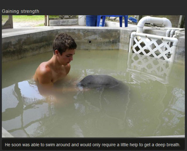 A Kind Human Rescues a Sweet Manatee