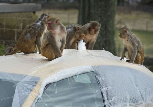 Bubble Wrap Is a Useful Monkey Deterrent