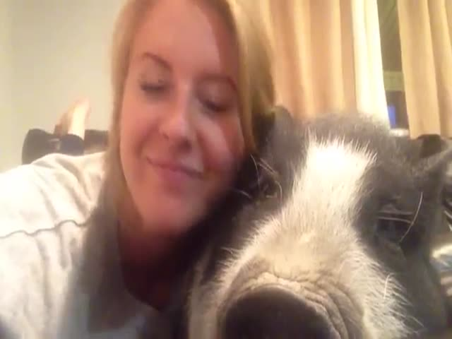 Pig Doesn't Want to Be Cuddled