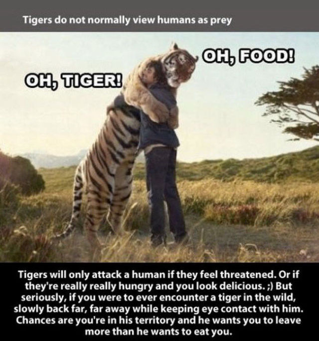 Fun Tiger Truths That You Will Be Interested to Learn