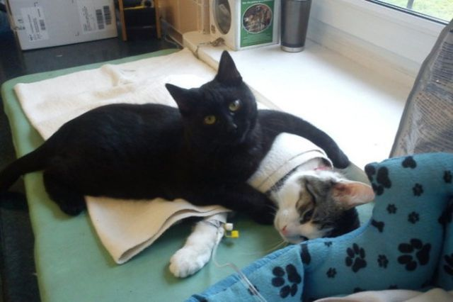 The Incredible Nursing Cat