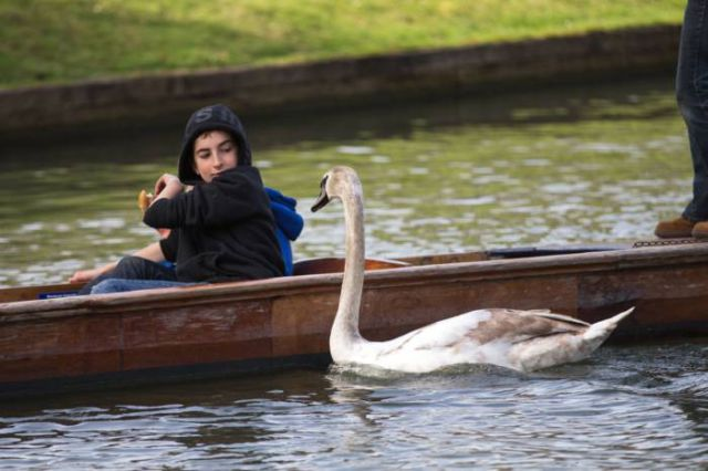 The Mean Swan That's Taking over His Grandfather's Legacy