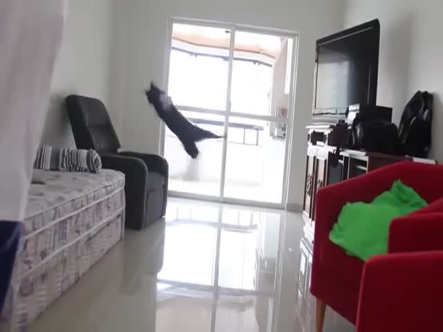 This Cat Is an Excellent Goalkeeper