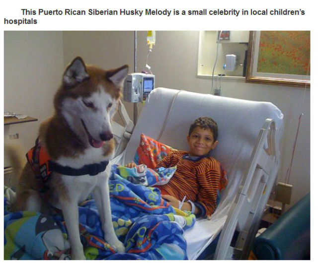 Therapy Dogs Are Four Legged Miracle Workers
