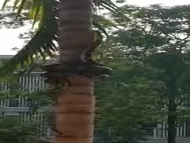 Check Out This Snake's Technique to Climb a Tree