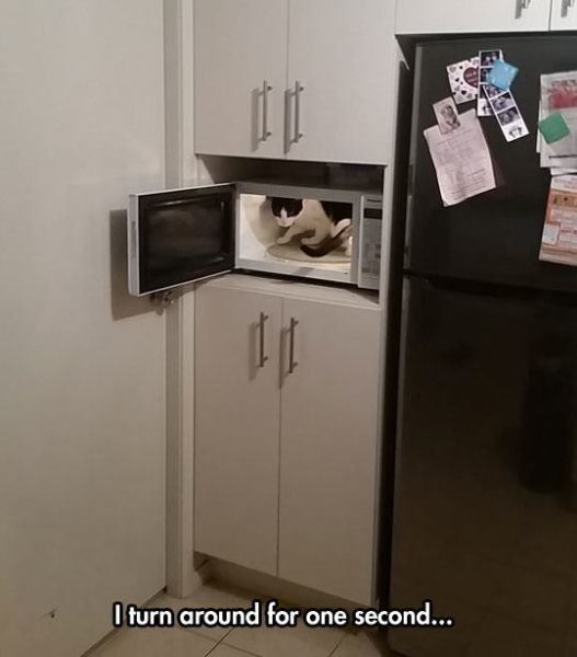 People and Animals Who Have Sneakiness Totally Nailed