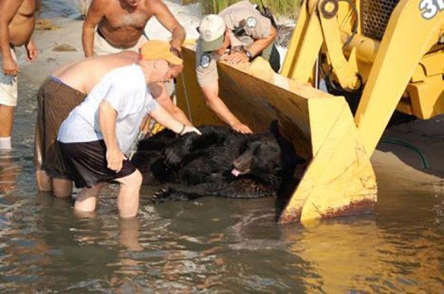 Brave Man Risks Drowning to Save a Sleepy Bear
