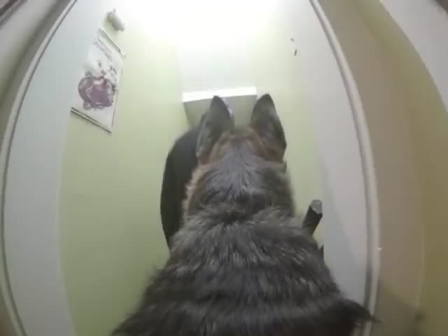What Your Dog Does When Left Home Alone  (VIDEO)
