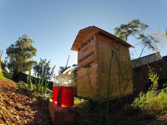 An Innovative Beehive That Delivers Honey on Tap