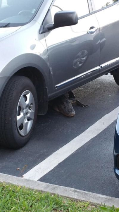 This Is Not What You Want to Find Lurking Underneath Your Car