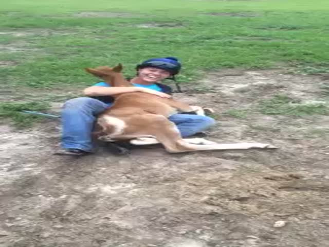 Baby Horse Wants to Cuddle  (VIDEO)