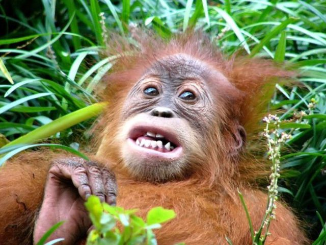 Wild Animals Can Be Really Funny Sometimes Too