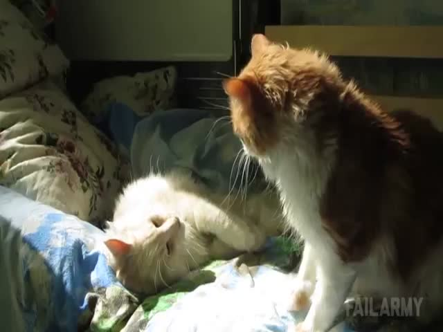 The Ultimate Cats Being Jerks Compilation