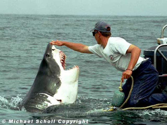 The Man Who Is Friends with a Shark