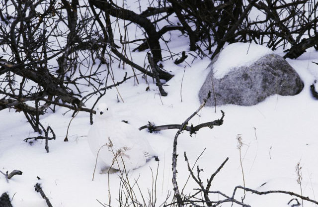 Only Animals in Nature Know How to Hide Away in Plain Sight