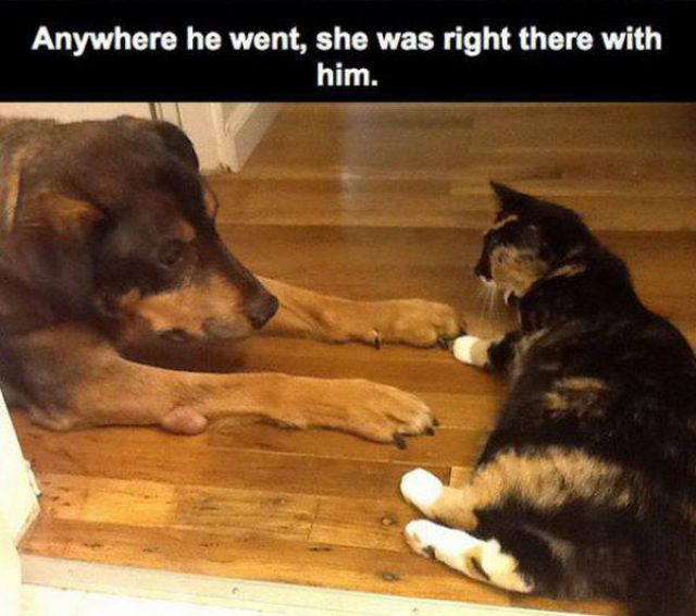Touching Story About Dog and Cat Who Truly Love One Another