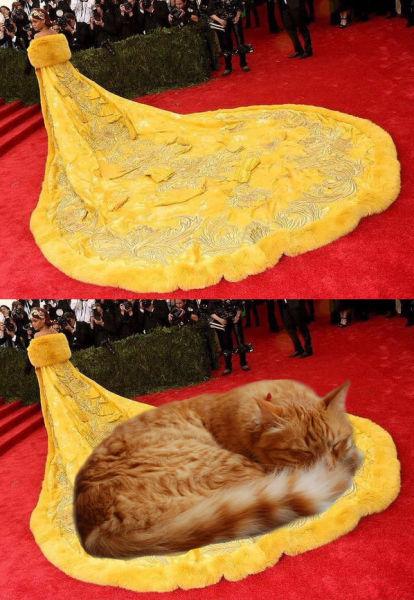 cat train