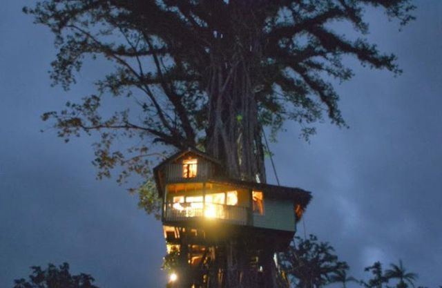 "Now You Can Holiday in the Trees at This One-of-a-kind ""Treesort"""