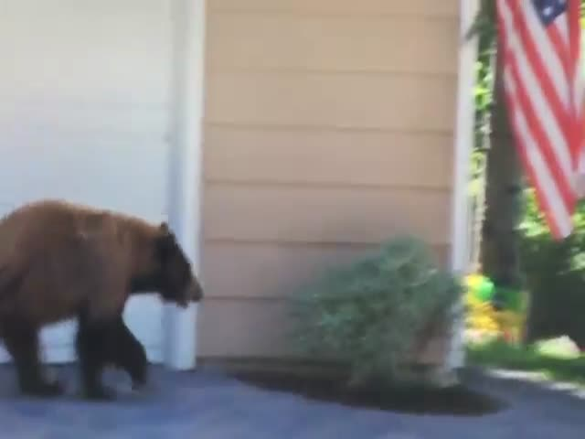 When a Bear and Man Unexpectedly Stumble upon Each Other