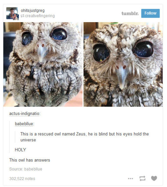 Tumblr Reflects on Nature and It Is Pretty Profound