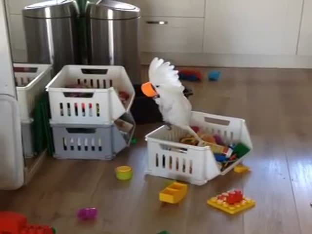Cockatoo Discovers a Cup Makes His Voice Sound Different  (VIDEO)
