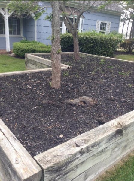 Homeowners Stumble across a Furry Surprise in Their Yard