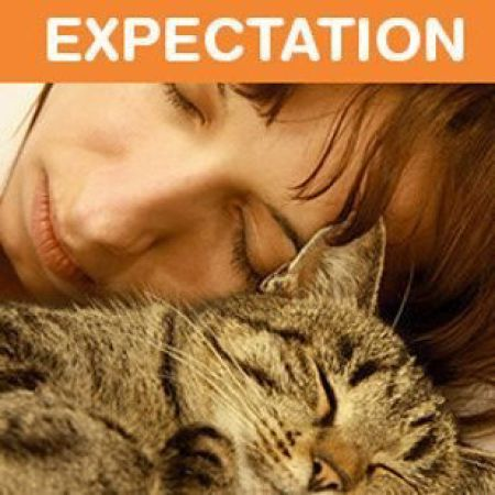 Life with a Cat: Expectations vs Reality