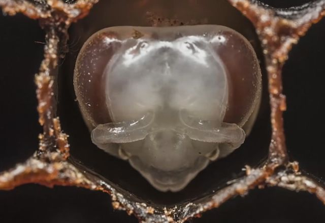 Mesmerizing Close-up of the Birth of Bees