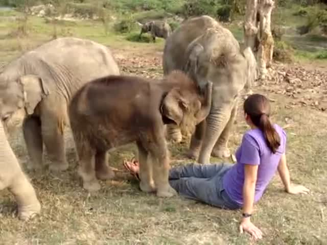 Baby Elephant Searches for Woman's Trunk  (VIDEO)