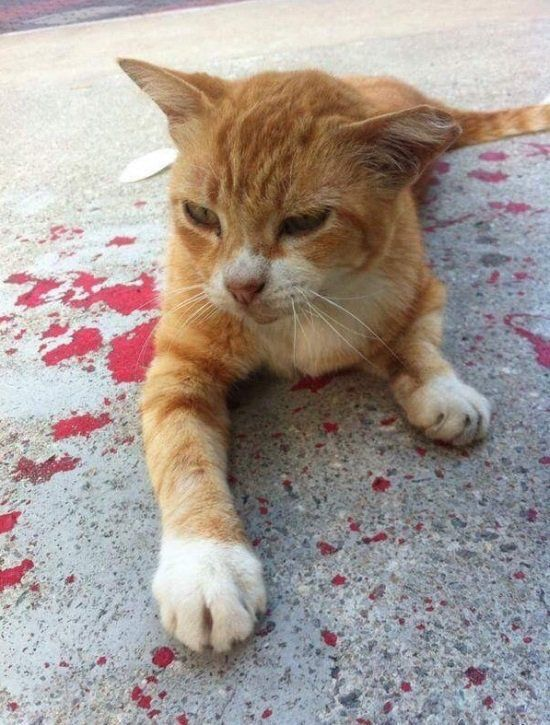 gambar kucing normal