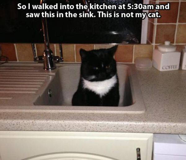 So You Don't Own a Cat?