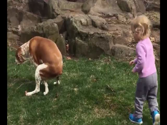 Little Girl Cheers on Pooping Dog  (VIDEO)