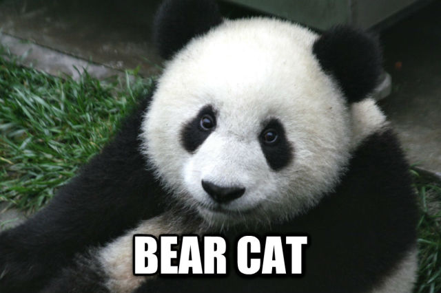 Chinese Words For Animals Translated Into English