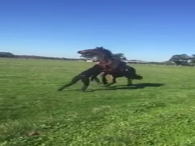 This Australian Horse Rider Should Not Have Insulted Her Horse
