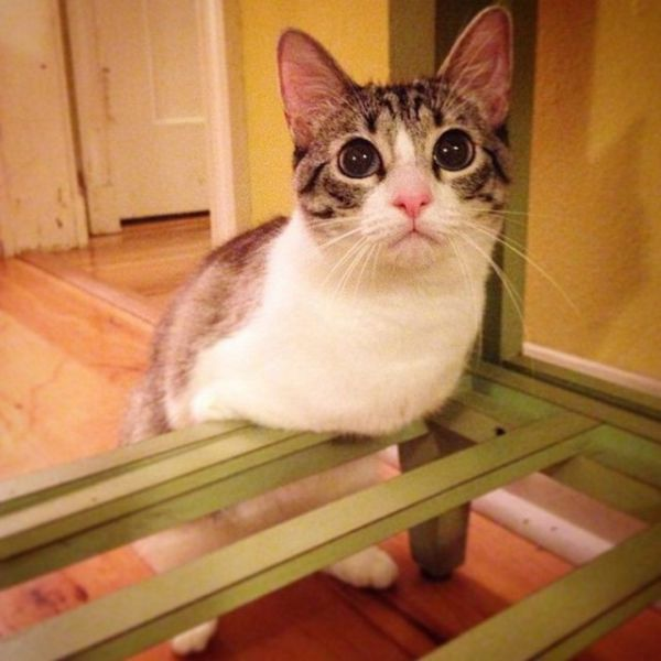 This Disabled Cat Is an Instagram Hit