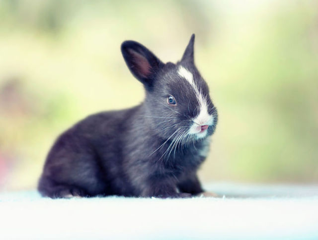 A 30 Day Photo Journey of a Growing Bunny