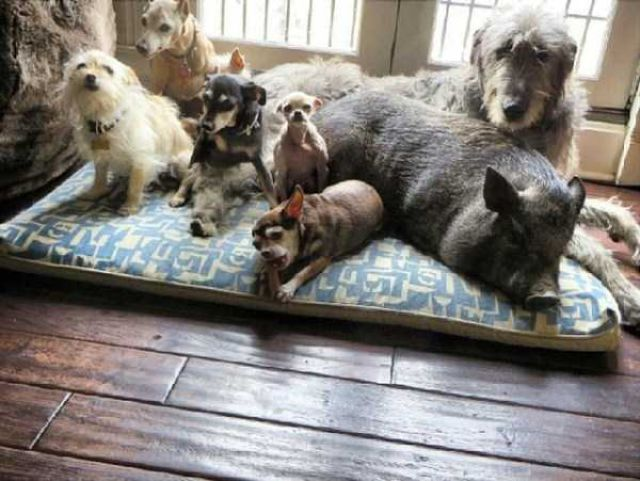 The Man Who Turned His House into an Animal Shelter