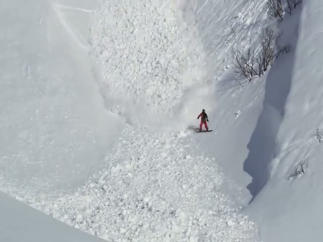 Plucky Rabbit Successfully Evaded Huge Avalanche  (VIDEO)