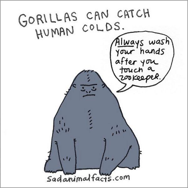 Humorous Illustrations of Sad Animal Facts