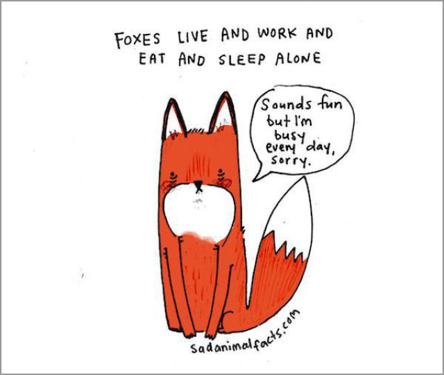 Humorous Illustrations of Sad Animal Facts