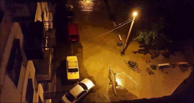 Flooding Causes Zoo Animals Flee the Tbilisi Zoo