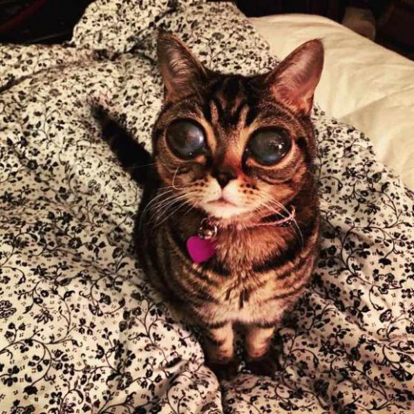 The Cat with the Alien Eyes