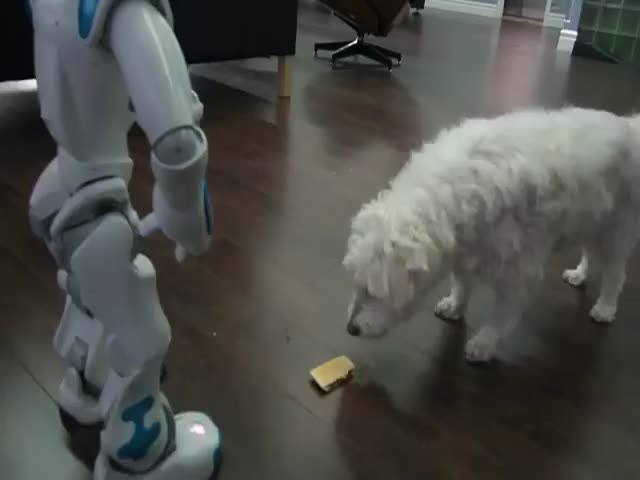 This $8000 Robot Is No Match for a Dog and a Pop Tart