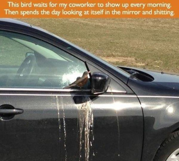 Birds That Are Huge Jerks