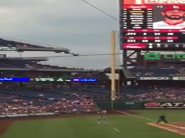 Squirrel Is in the Heart of the Action During Phillies Game