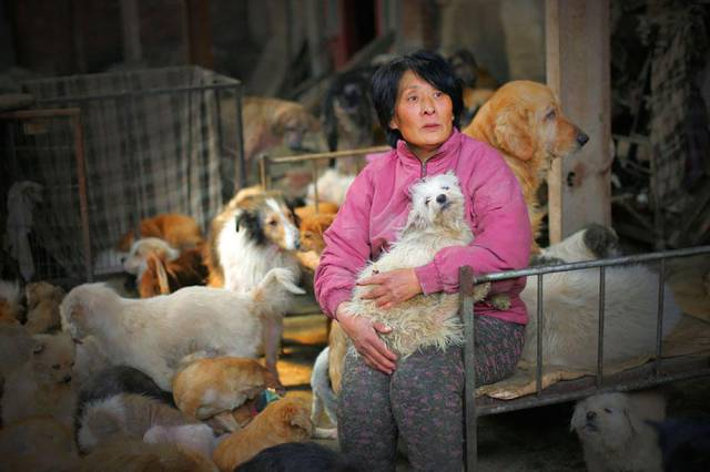 Chinese Woman Rescues Dogs from Being Eaten During the Summer Solstice Festival