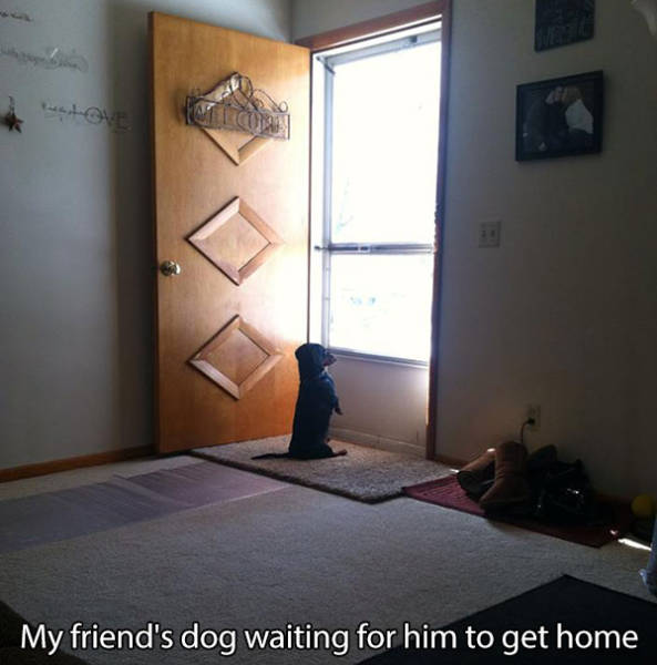 If You've Ever Owned a Dog You Will Understand This Perfectly