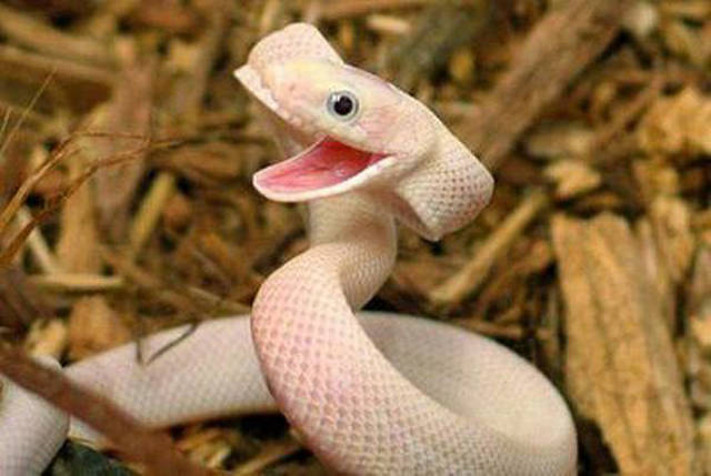 Vicious Animals Show Off Their Much Cuter and Softer Sides